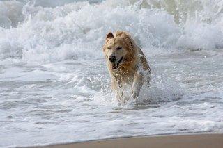 Hundepool - Erfrischung und Abkühlung für Hunde