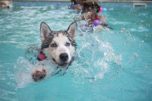 hundepool nach dem baden