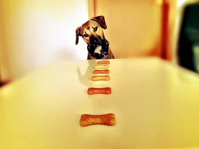 hund nahrungsergaenzung futter