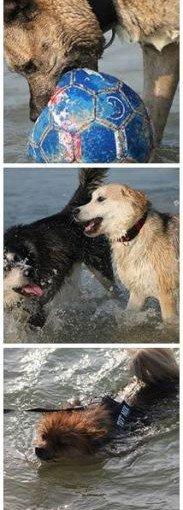 hunde-am-see-im-sommer-strand-183x510