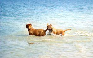 Hundeplanschbecken vs Hundestrand