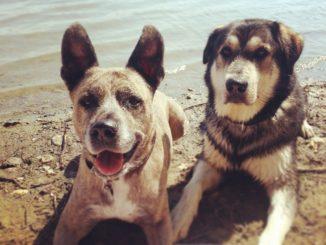 Sunny und Pan - meine Hunde