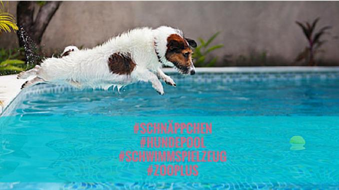 Hundepool Zooplus Angebot