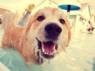 Hundepool Reinigen