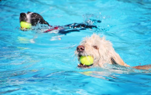 Badespaß für Hunde
