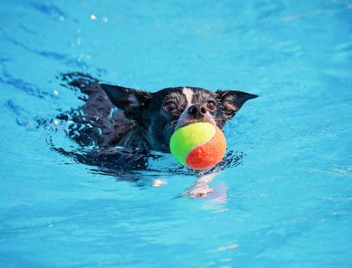 Hundepool und Hundeschwimmbecken für kleine Hunde