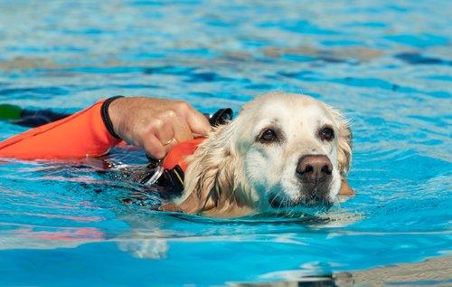 Hundeschwimmweste im Einsatz