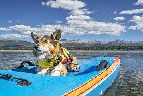 Hundezubehör für das Schwimmen mit Hund