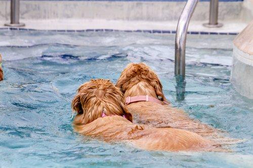 Wasserfestes Hundehalsband
