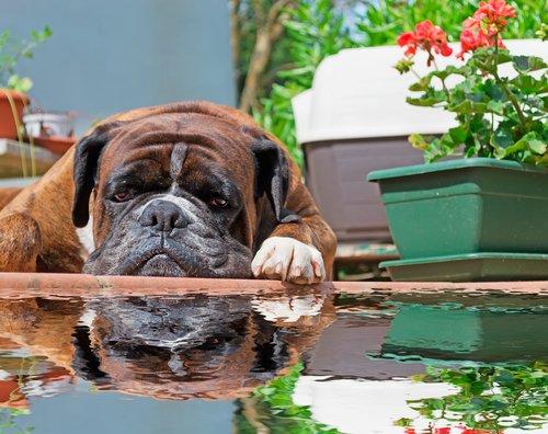 Garteneich als Hundeschwimmbecken