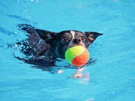 Hundepools für kleine Hunde