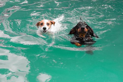 Pools für kleine und große Hunde
