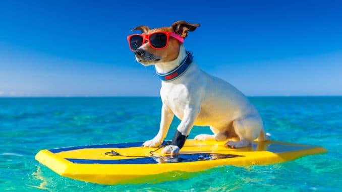 Pools in denen Hunde schwimmen können