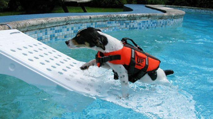 Skamper Ramp Hunderampe für Pools und Boot