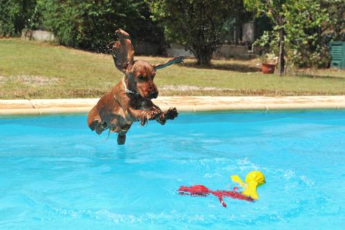 XXL Hundepool für große Hunde - großer Schwimmspaß